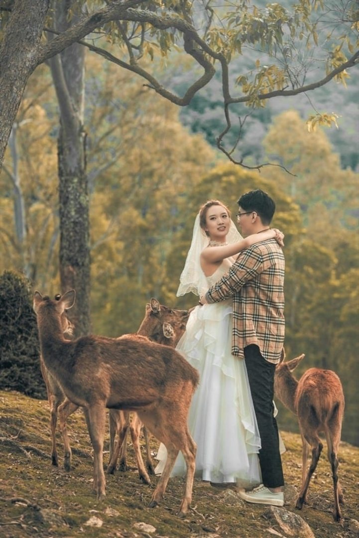 Wedding Venue - Lyell Deer Sanctuary 9 on Veilability