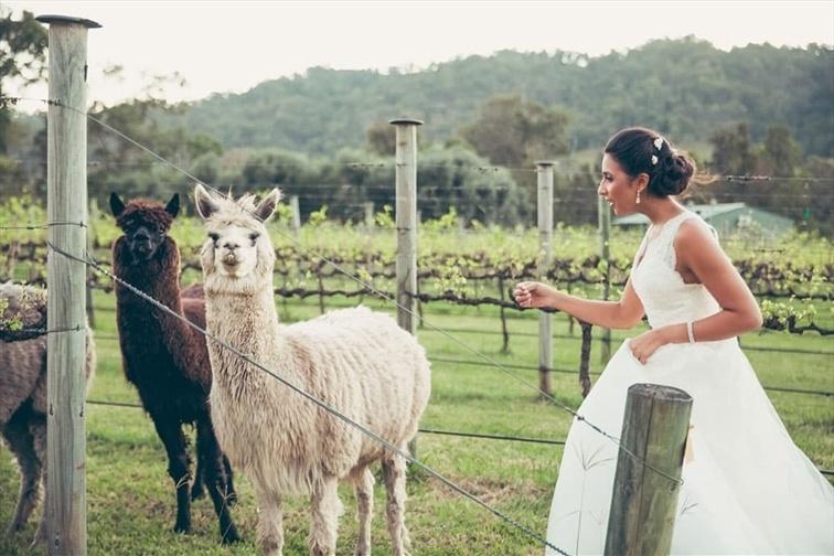 Wedding Venue - Sarabah Estate Vineyard 10 on Veilability