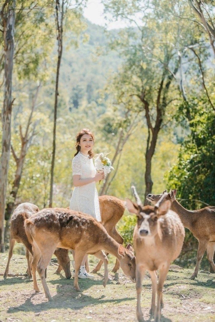 Wedding Venue - Lyell Deer Sanctuary - Lyell Deer Cafe 4 on Veilability