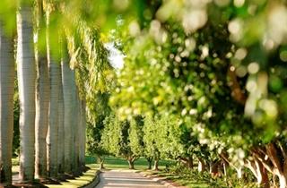 Wedding Venue - Intercontinental Sanctuary Cove Resort 5 on Veilability