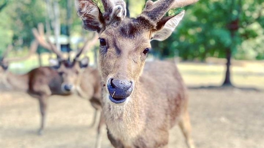 Wedding Venue - Lyell Deer Sanctuary 17 on Veilability